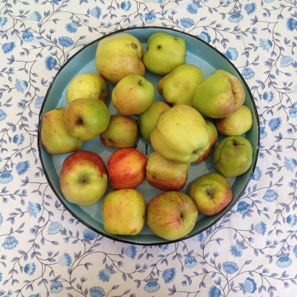 æblerodguf